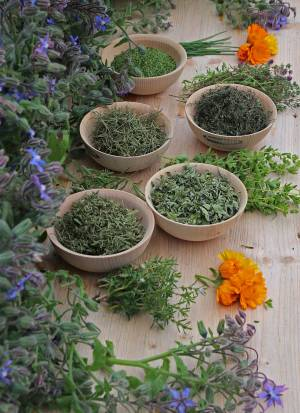 You can get a lot of organic herbs from the farm Grosswidmoos | © Bio aus dem Tal